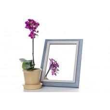 Зеркало в багете 3118-167 15*21