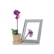 Зеркало в багете 3118-171