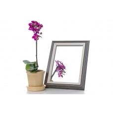 Зеркало в багете 3118-184 15*21