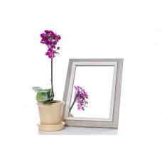 Зеркало в багете 3118-185 15*21